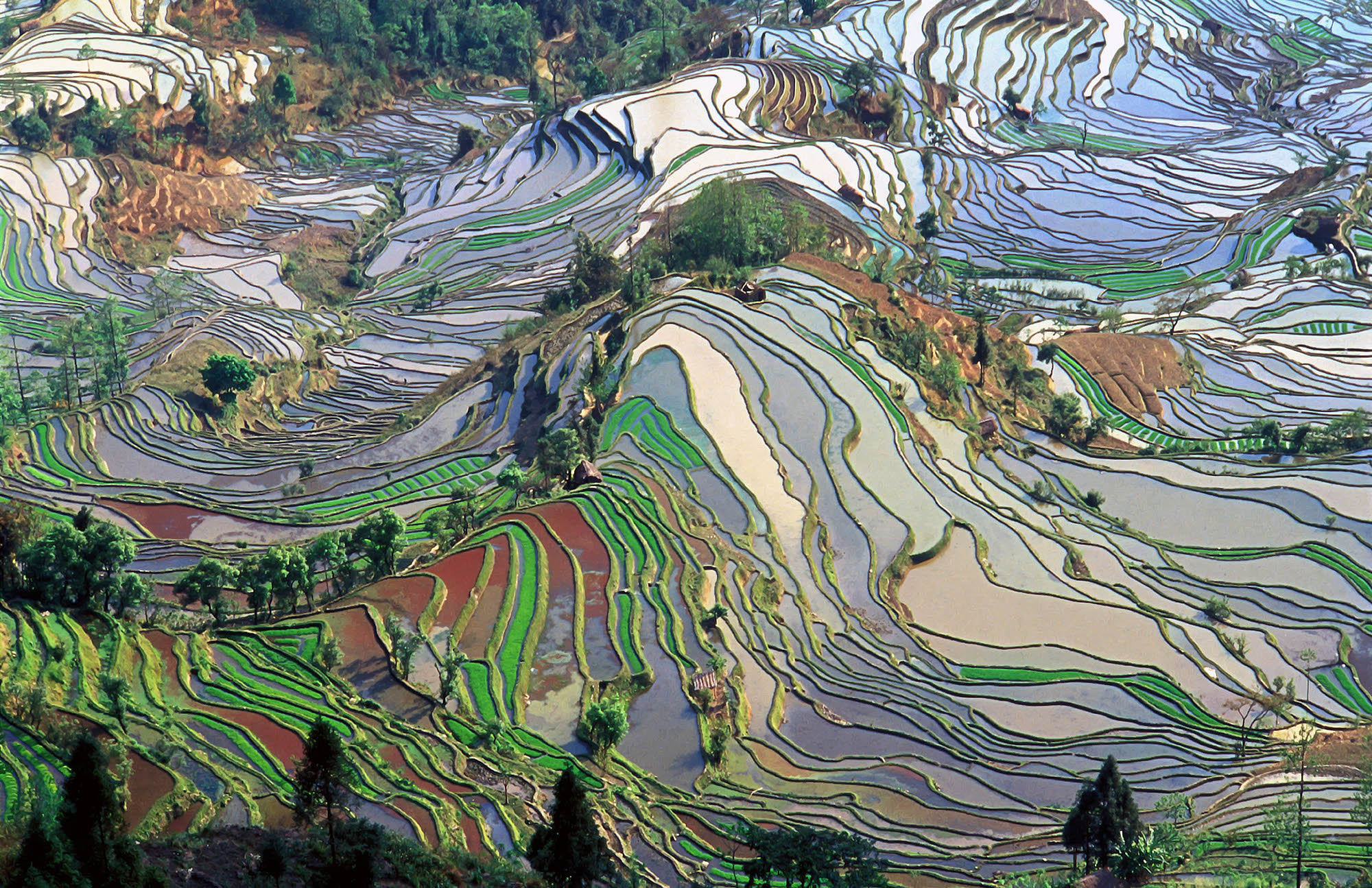 Yuanyang Rice Terraces, China